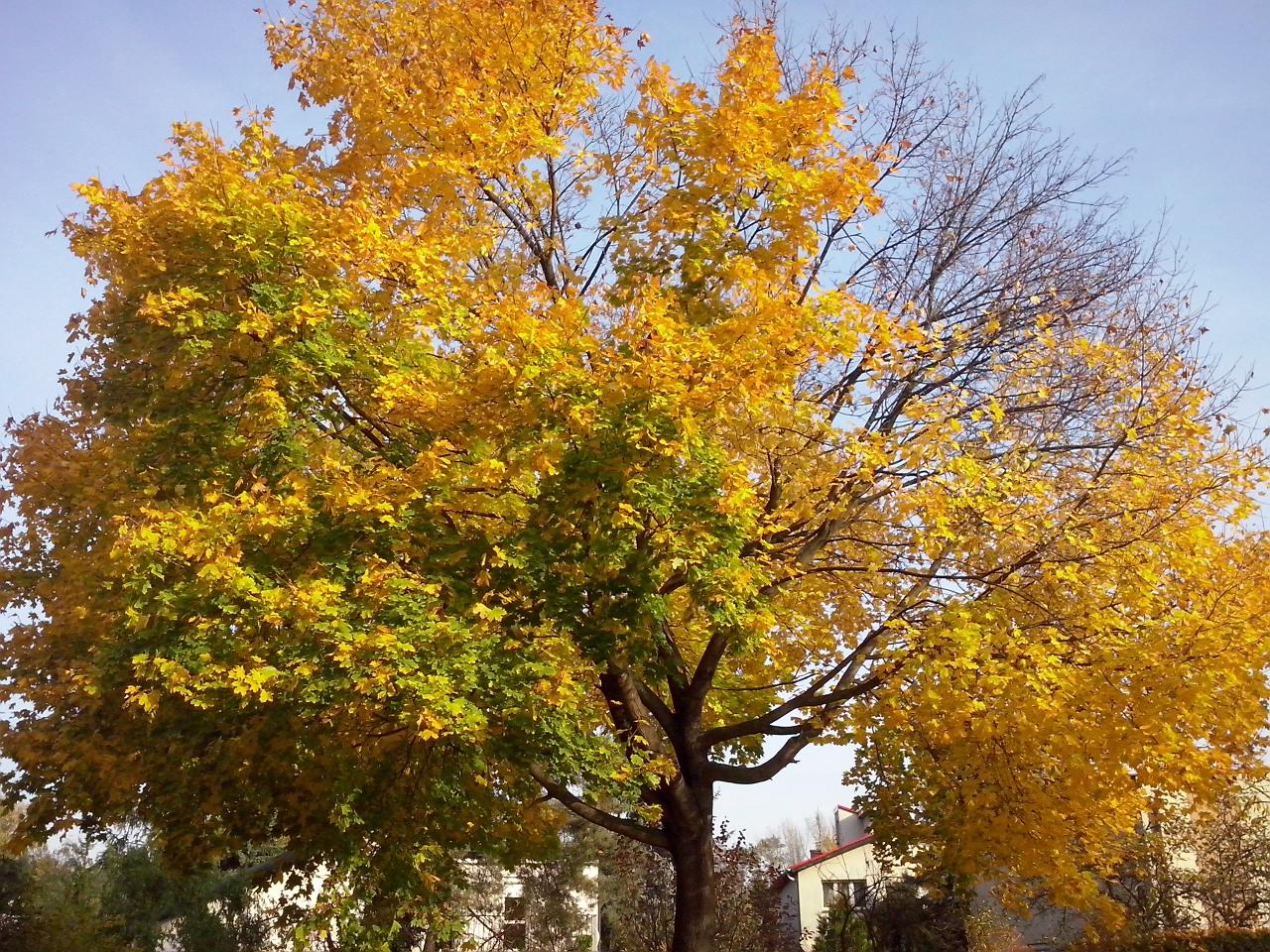 Taką jesień zniosę.
